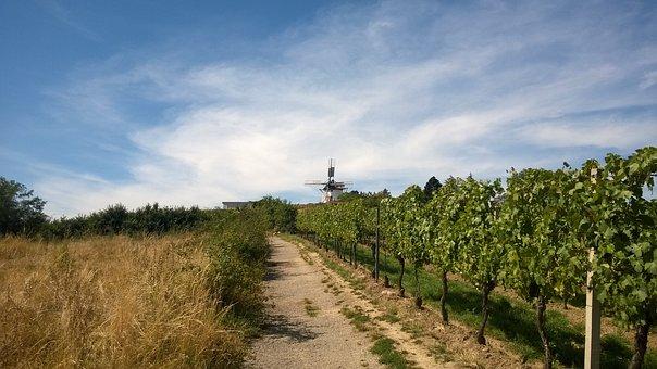 Retz, Windmill, Wine, Vines, Mill, Landscape, Clouds