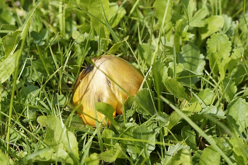 Mushroom, Hidden, Grass, Autumn, Grow, In The Grass