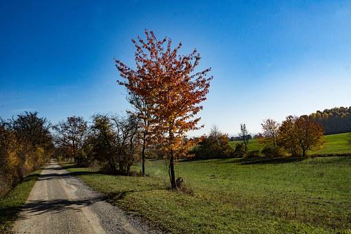 Hainich, Autumn, Colorful, Fall Foliage, Leaves