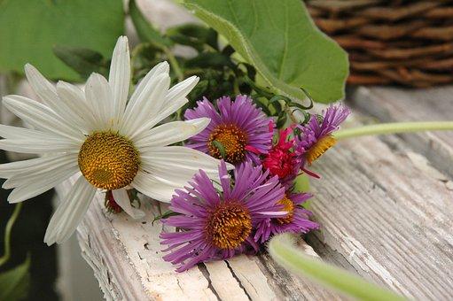 Daisy, Perennials, Flower, Nature, Floral, Garden