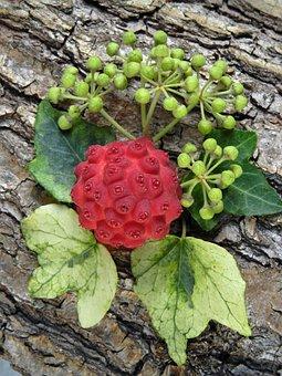 Asian Dogwood, Fruits, Red, Arrangement, Ornus Kousa