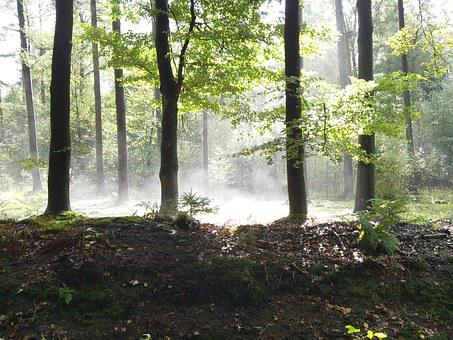 Forest, Trees, Sun, Sunlight, Patch Fog