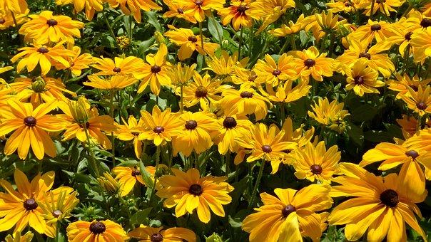 Yellow Flower, Ornamental Plants, Flower Garden