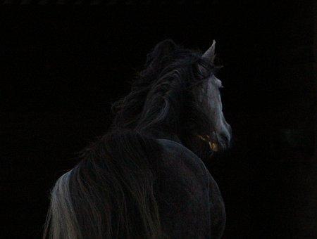 Horse, Arabic, Against Day, Night, Dark, Horse Back