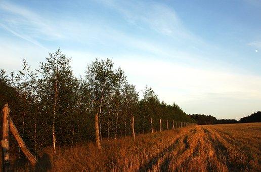 Landscape, Poland, Sky, Blue, Scenery, Nature, Grass