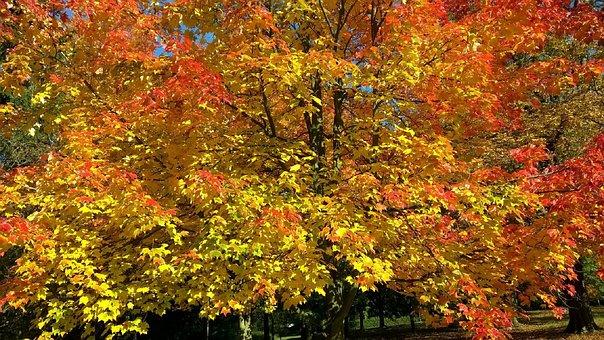 Autumn, Fall, Leaves, Tree, Essex, Wood, Sky, Blue