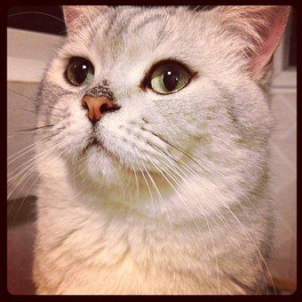 Cat, Small Cat, Animal, Steamed Stuffed Bun
