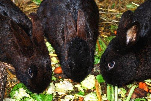 Bunnies, Bunny, Rabbits, Coney, Cony, Farm Animal