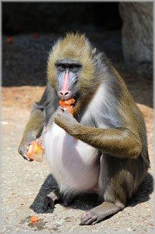Monkey, Monkeys, Fruit, Delicacy, Business, Zoo, Artis