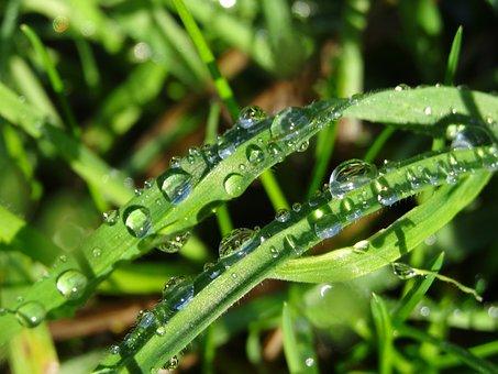 Morgentau, Raindrop, Dew, Dewdrop, Drip, Green, Leaves