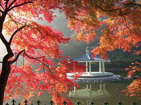Nature, Autumn Leaves, Autumn, Landscape, Forest