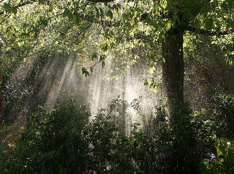 Rain, Garden, Sun, Nature, Against Day, Light And Shade