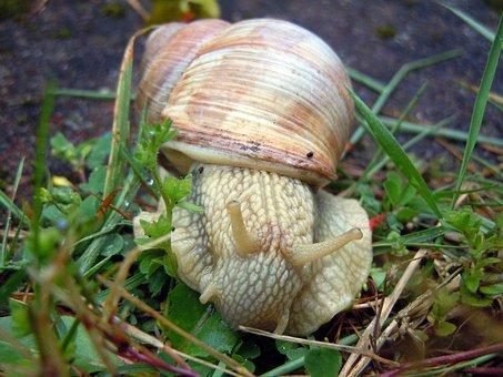 Marko Recording, Snail, Mollusk