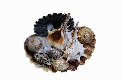Sea, Shell, Nature, Murex, Macro, Whelks, Seafood