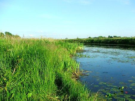 Nature, River, Warta
