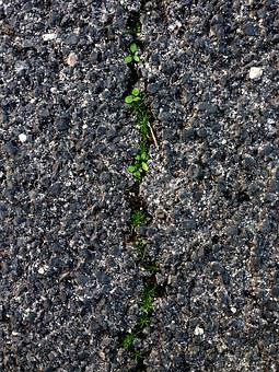 Soil, Ground Grass, Grass Crack, Road Crack