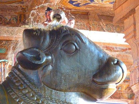 Temple, Bull Temple, Nandi, Ceremony
