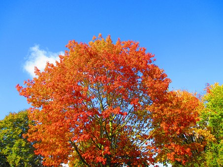 Autumn Foliage Hot Spot, Colorful, Red, Yellow, Sky