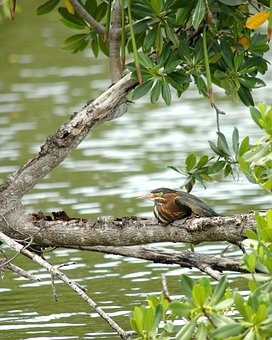 Kingfisher, King Fisher, Bird, Fly, Wings, Feather