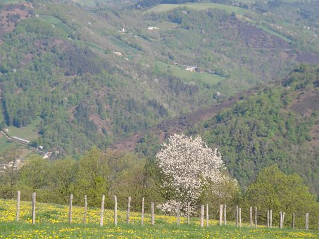 Valle Of The Lot, Cantal, France