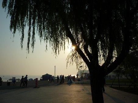 China, Dalian, Evening Sunset, Tree, Organic