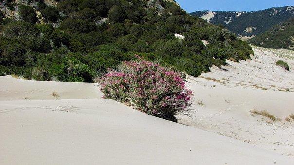 Cyprus, Karpasia, Golden Beach, Nature, Dunes, Sand