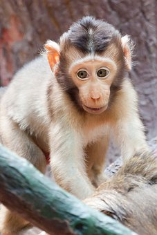 Baby, Animal, Africa, Monkey, Face, Infant, Cute