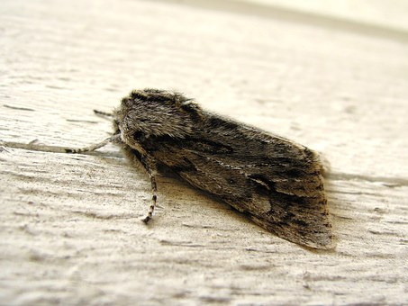 Bug, Kiitäjä, Butterfly, Insect, A Side, The Antennæ