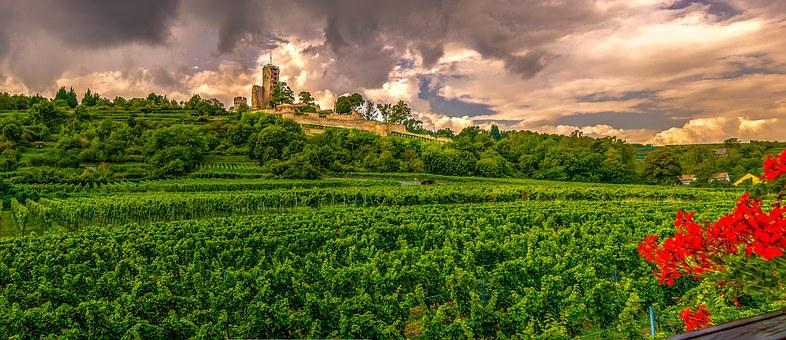 Home Guard, Squall Line, Castle, Vineyard, Nature
