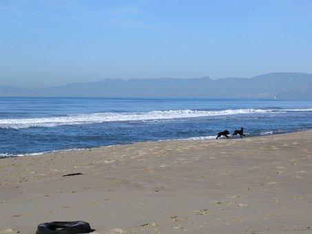Oxnard, Beach, Dogs, Wave, Mountains, Distance, Ocean