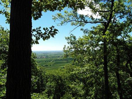 Palatine Views, Hiking, Palatinate