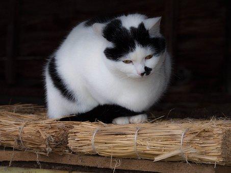Cat, Tenderly, Straw, Home, Sitting, White