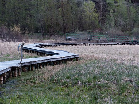 Biotope, Web, Moor, Ampolasee, Reserve, Trentino