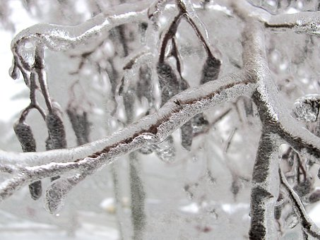 Winter, Tree, Branch, Bough, Ice, Frozen, Nature