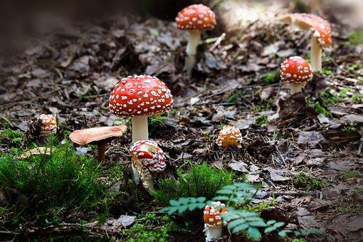 Matryoshka, Amanita Muscaria, Mushroom, Hat, Red