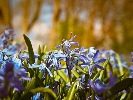 Bluebell, Flowers, Blue, Butterfly Orchid