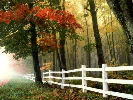 Early Morning, Autumn, Fall, Forest, Fence, Landscape