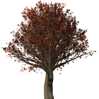 Tree, Oak, Oak Tree, Quercus, Fall Leaves, Fall Colors