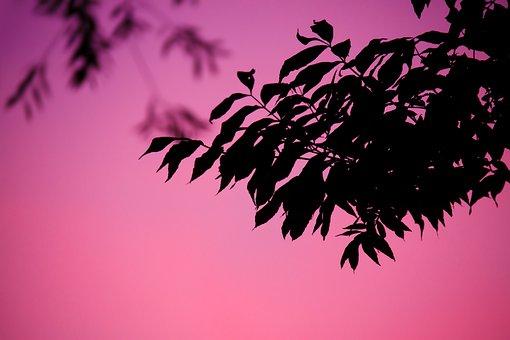 Background, Branch, Dusk, Evening, Leaf, Nature