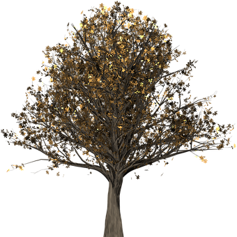 Tree, Oak, Oak Tree, Isolated, Quercus, Fall Leaves