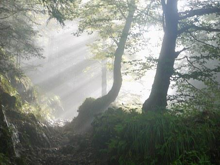 Rise, Morning, Fog, Sunbeam, Mystical