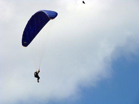 Bird, Parachuting, Parachute, Sky, Freedom, Blue