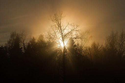 Sunset, Trees, Mist, Silhouette, Sun, Nature, Evening