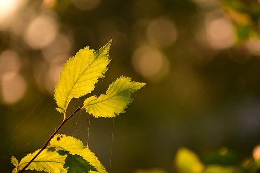 Leaves, Light, Green, Autumn, Back Light, Sun, Bright