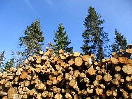 Birch, Birch Cut Down, Forestry, Wood, Threes