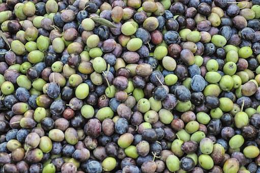 Olives, Green Olives, Black Olives, Olive Plantation
