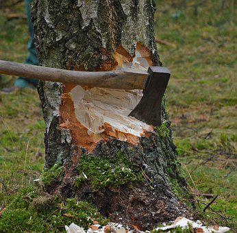 Cut Tree, Axe, Wood, Cases, Strains, Woodworks, Birch