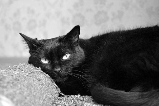Black Cat, Scratching Posts, Views, Cat, Cat Dreams