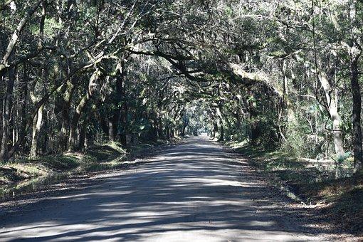 Dirt Road, Forest, South Carolina, Plantation, Remote