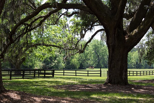 Pasture, Horses, Plantation, Farm, Nature, Rural